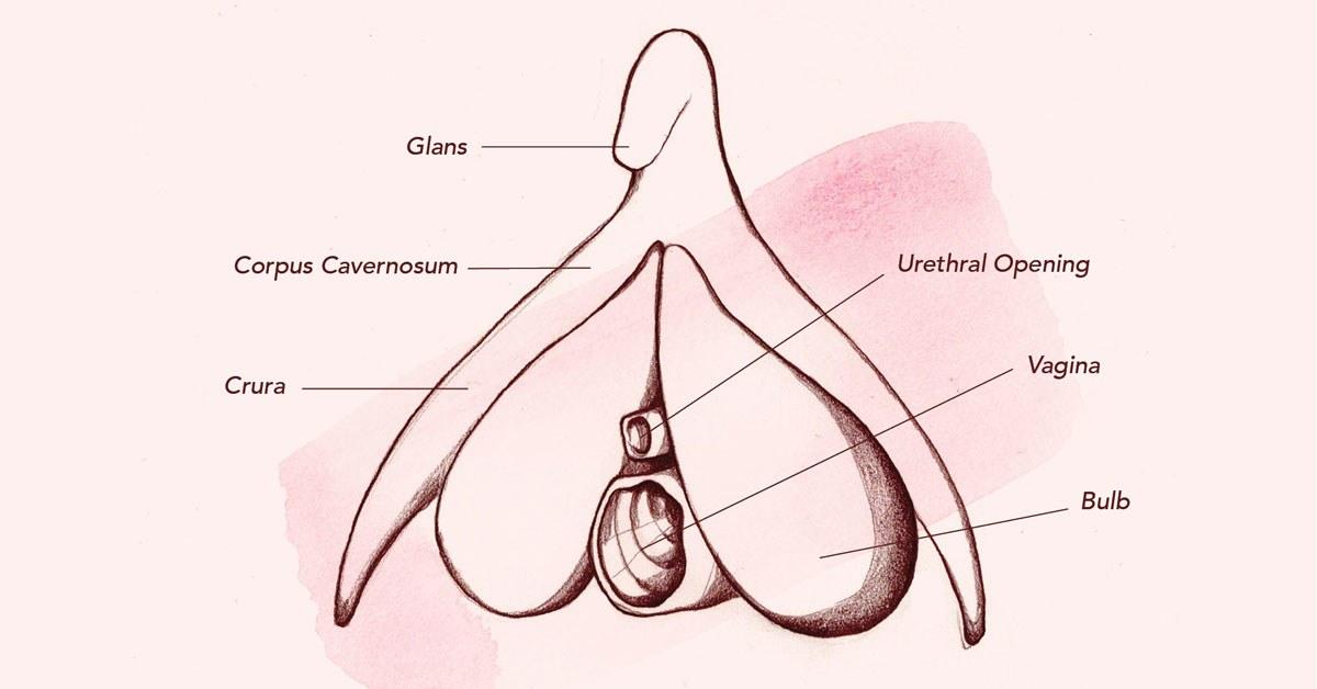 anaal orgasme clitoris